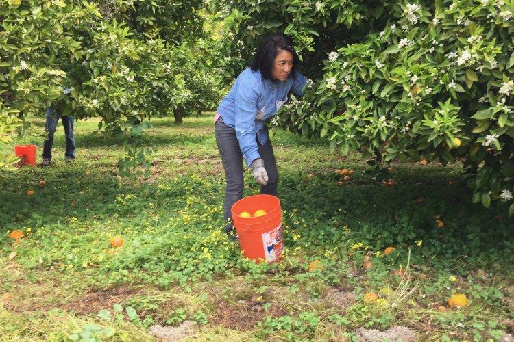 Orange Orchard volunteer 2019