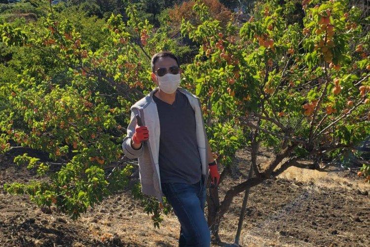 Los Altos Hills hillside apricots